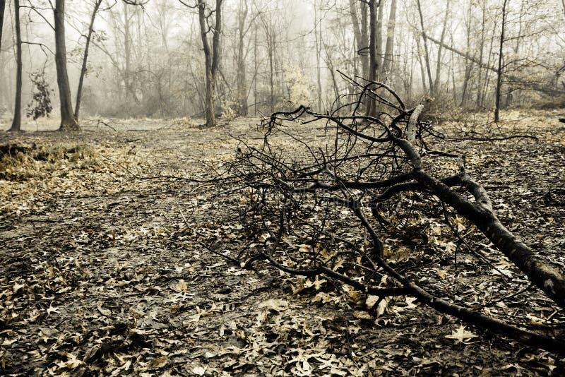 Creepy Foggy Woods stock image