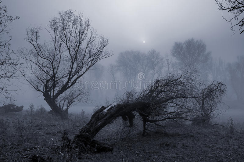 Creepy Landscape Painting Showing Dark Forest On Misty Day