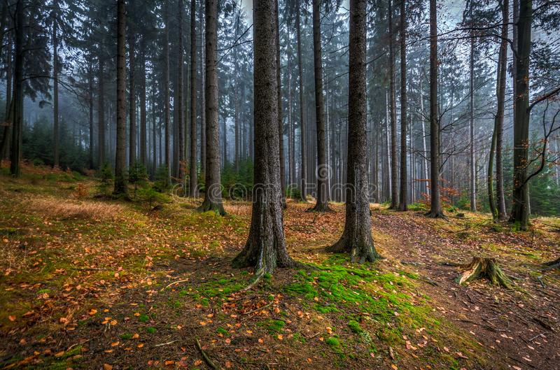 Creepy mystic forest with green grass and colorful fallen trees in Czech Moravian highland. Zdarske vrchy, Czech Republic royalty free stock photo