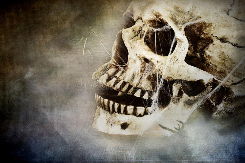 Creepy Skull. Spooky skull with spider webs. Room for copy space stock photography
