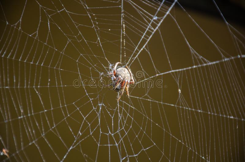 Creepy Spider Spinning her web stock photography