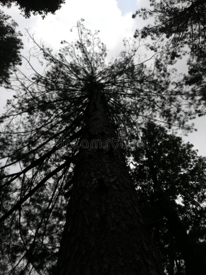 A creepy tree with a story. Darkness, sky royalty free stock photography