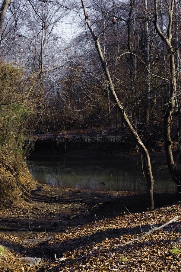 Creepy Winter Lagoon royalty free stock photography