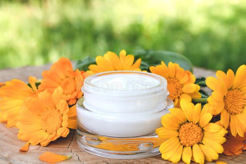 Crema para el cuidado del cuerpo con el calendula Flores anaranjadas frescas del calendula en un fondo de madera en naturaleza Cr fotografía de archivo
