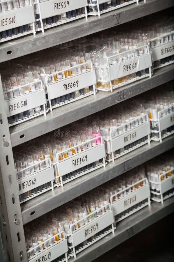 Cremalheiras dos tubos de ensaio em prateleiras imagens de stock