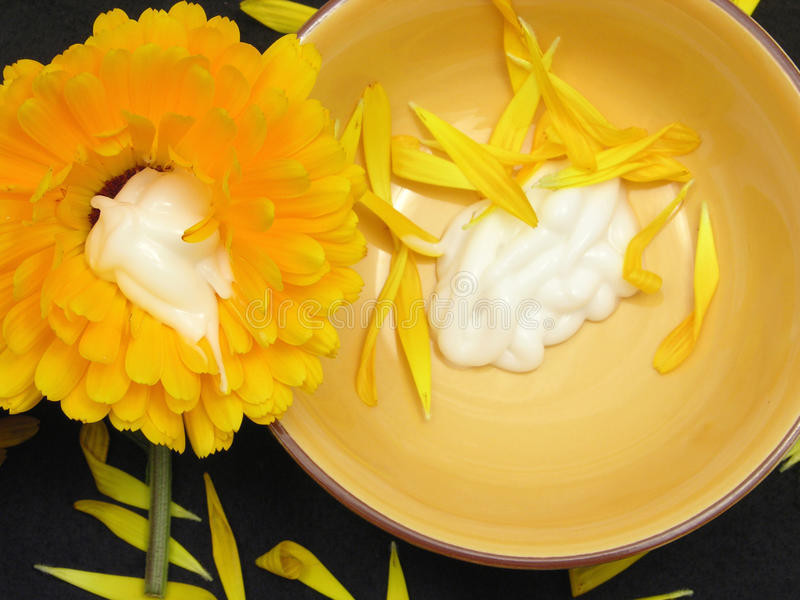 Creme der Ringelblume mit den Blumenblättern und Blume lizenzfreie stockfotografie