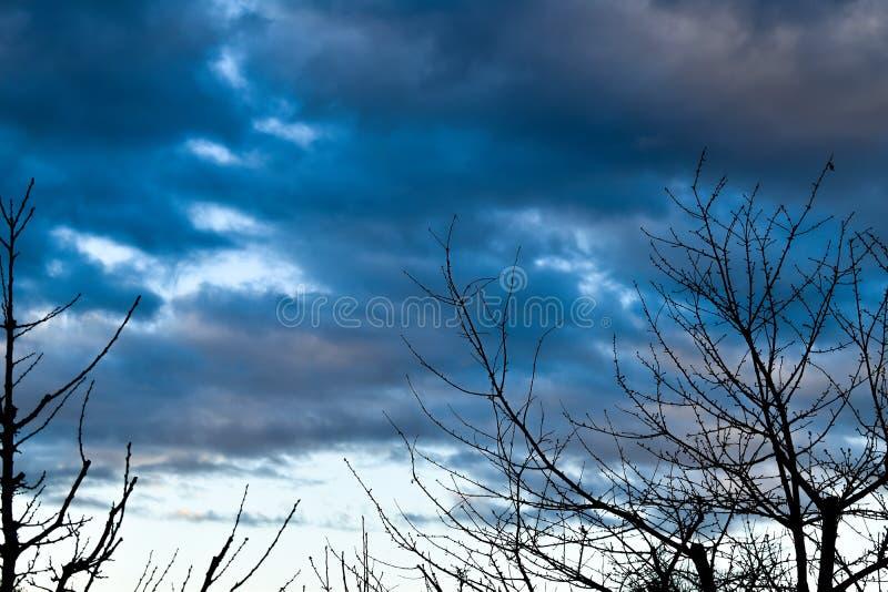 Crepúsculo - céus nebulosos com silhuetas da árvore foto de stock