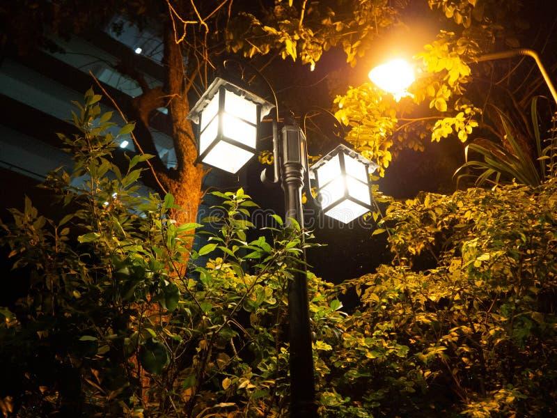 Crepúsculo del árbol de la calle de la luz de la lámpara fotos de archivo
