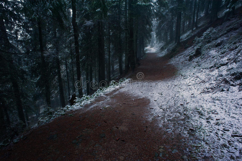 Crepúsculo enevoado na floresta imagem de stock