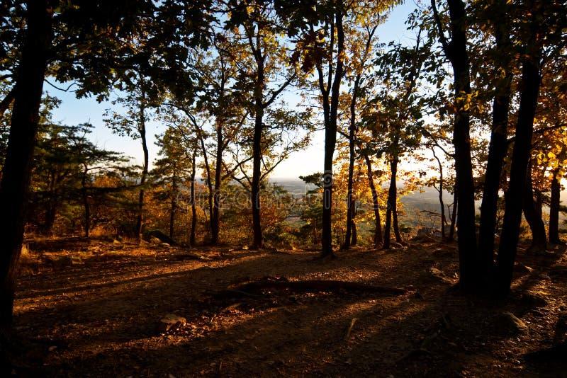 Crepúsculo na floresta imagens de stock