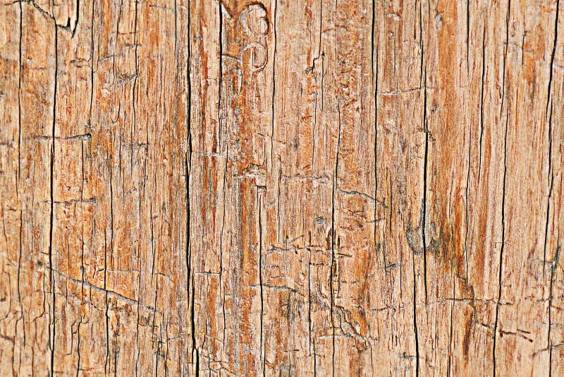 Crepa e graffio su legno per il modello fotografie stock libere da diritti
