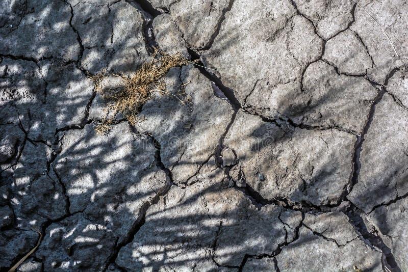 Crepe nel suolo fertile, come conseguenza di assenza prolungata di precipitazione, con le ombre dal calore esaurito delle piante fotografia stock