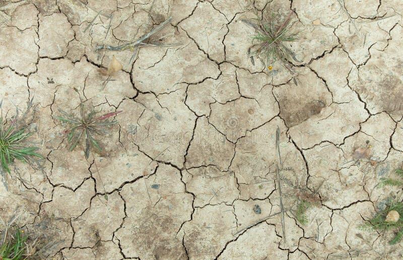 Crepe nella terra, fine su di una superficie di terra asciutta, molte crepe su terra asciutta, la struttura della terra fotografie stock libere da diritti
