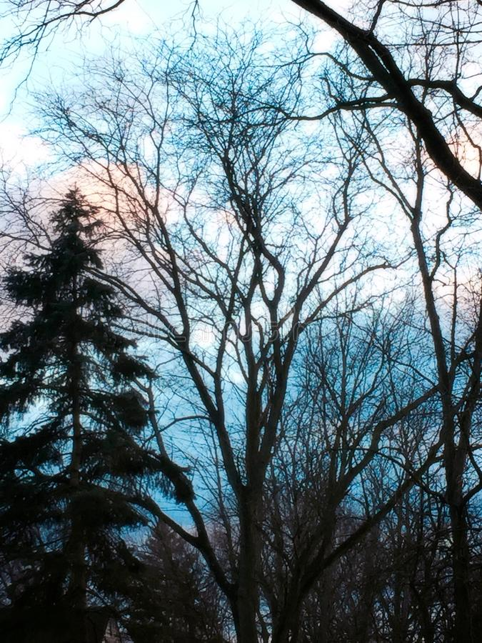Crepuscolo blu di inverno immagine stock libera da diritti