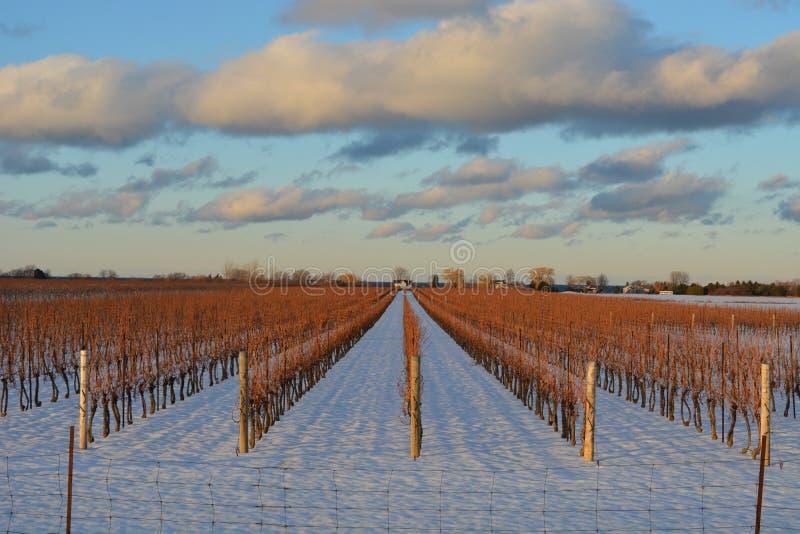 Crepuscolo nel paese di vino di Niagara fotografie stock