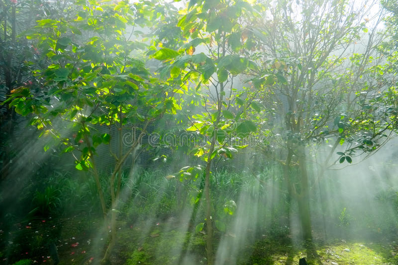 Download Crepuscular Rays In A Forest Stock Photo - Image: 28191672