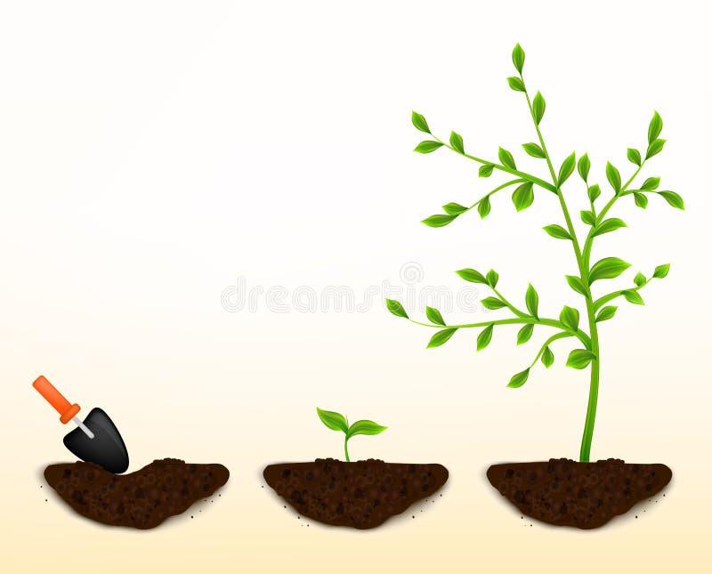 Cresça o vetor das plantas ilustração stock
