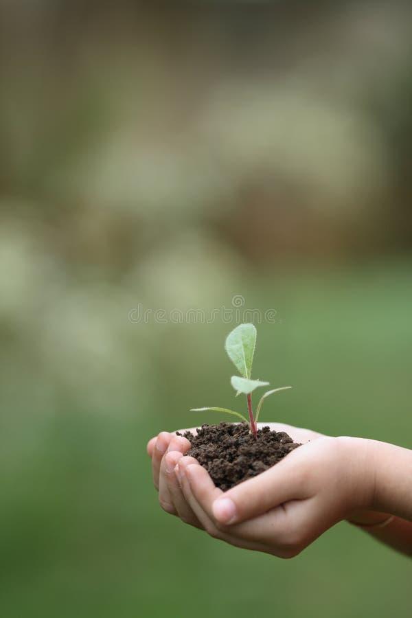 Cresça plantas foto de stock