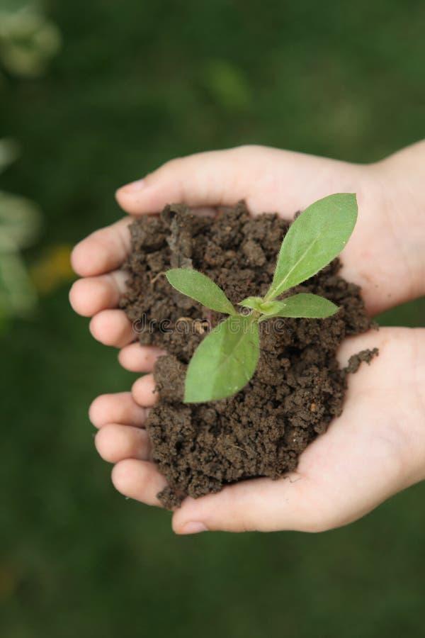 Cresça plantas fotografia de stock