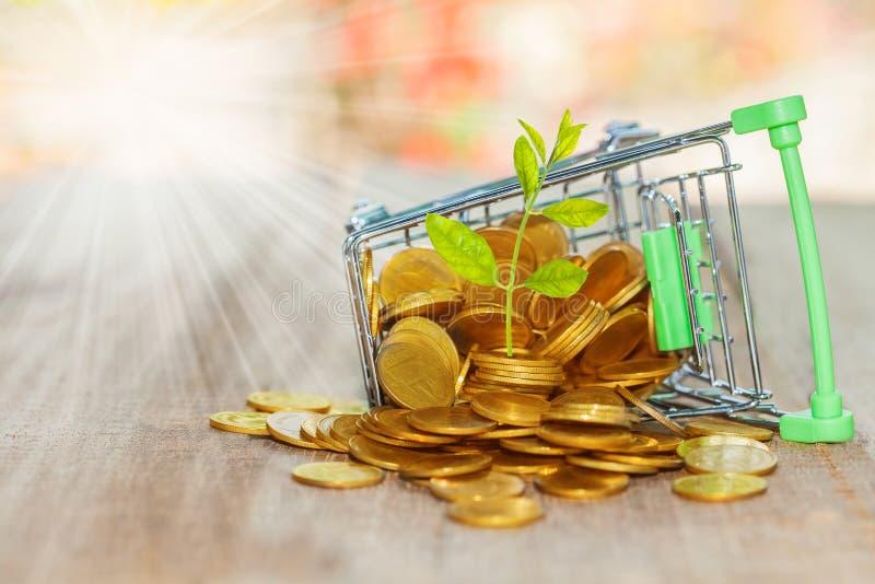 Cresça plantas pequenas com as moedas empilhadas no trole com bokeh fotografia de stock