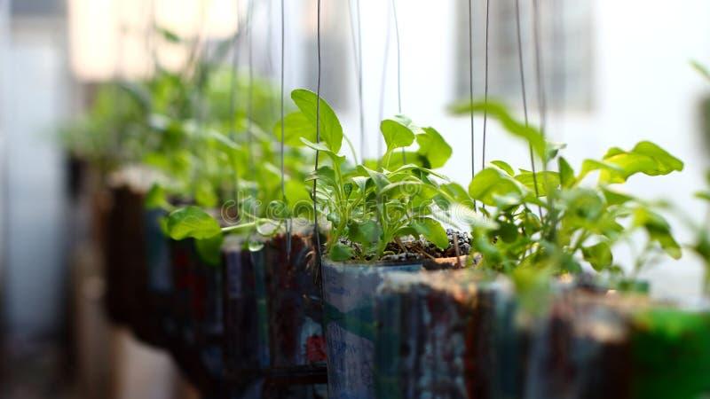 Cresça vegetais em uma garrafa pendurada ao lado da casa fotos de stock