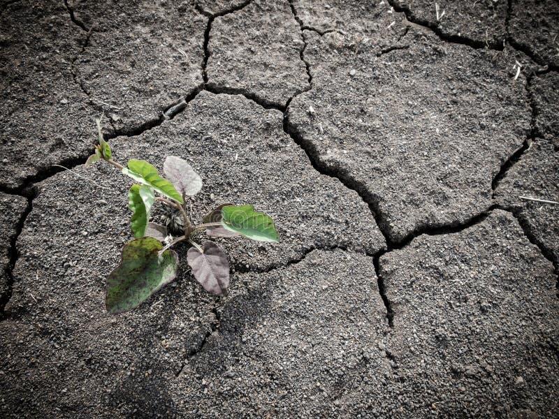 Crescendo pouca árvore no solo seco e da quebra imagem de stock