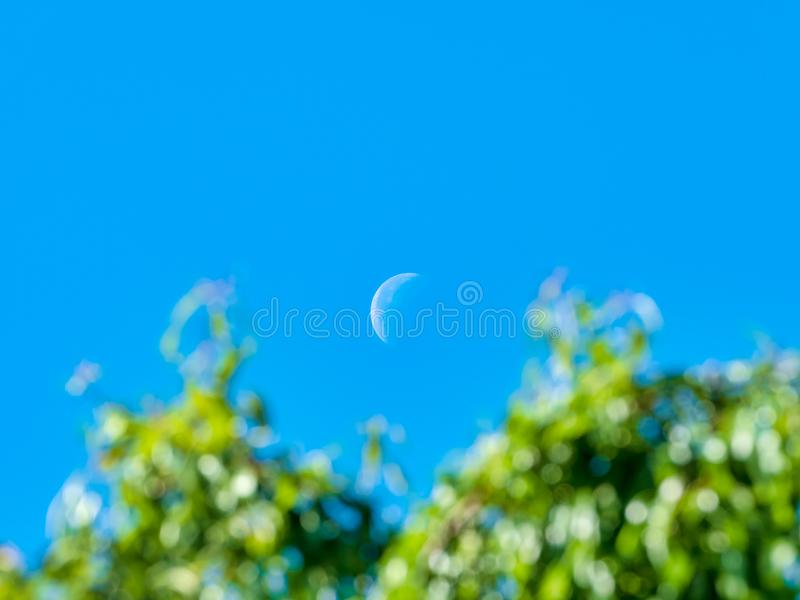 Scene with half day crescent moon and green tree branches in the foreground out of focus royalty free stock photography