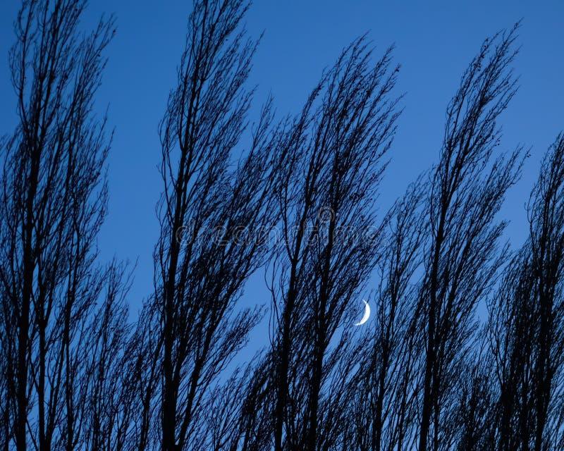 Crescent Moon Peeking Through träden royaltyfri fotografi