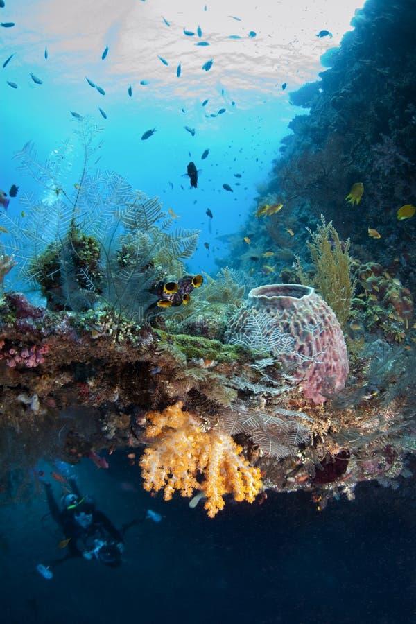 Crescimento coral prolífico imagens de stock royalty free