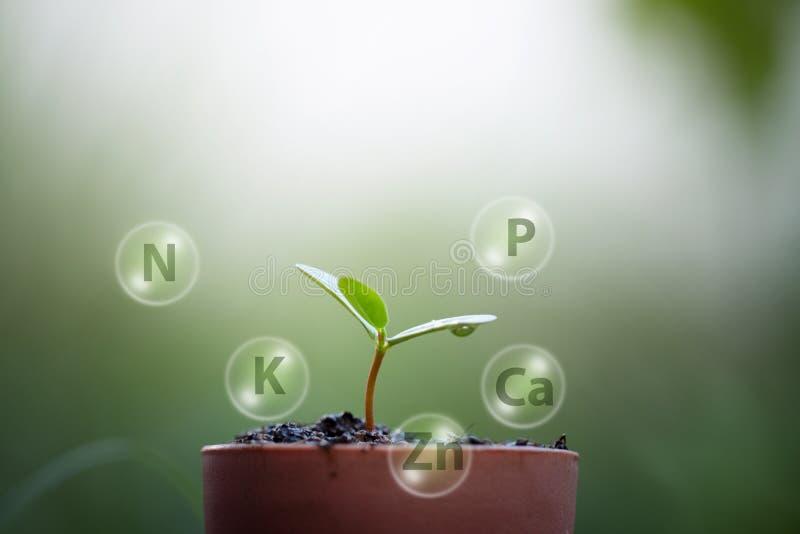Crescimento das plântulas dos solos e do ícone mineral digital fotografia de stock