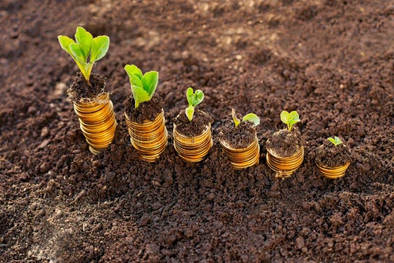 Crescimento de dinheiro cem contas de dólar que crescem na grama verde imagens de stock