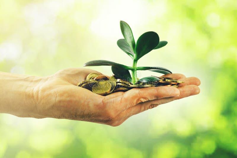 Crescimento de dinheiro e conceito do investimento mão com moedas e a planta pequena imagens de stock