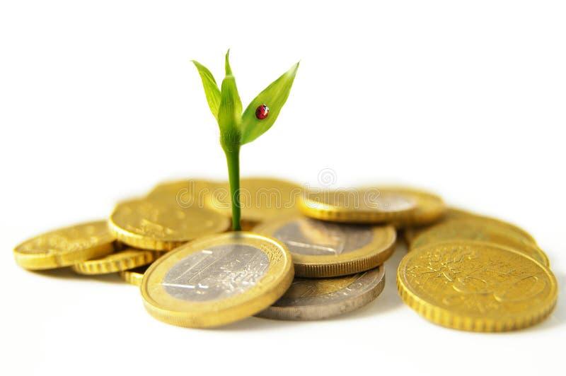 Crescimento de dinheiro novo fotos de stock