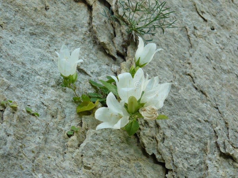 Crescimento de flor em uma rocha imagens de stock royalty free