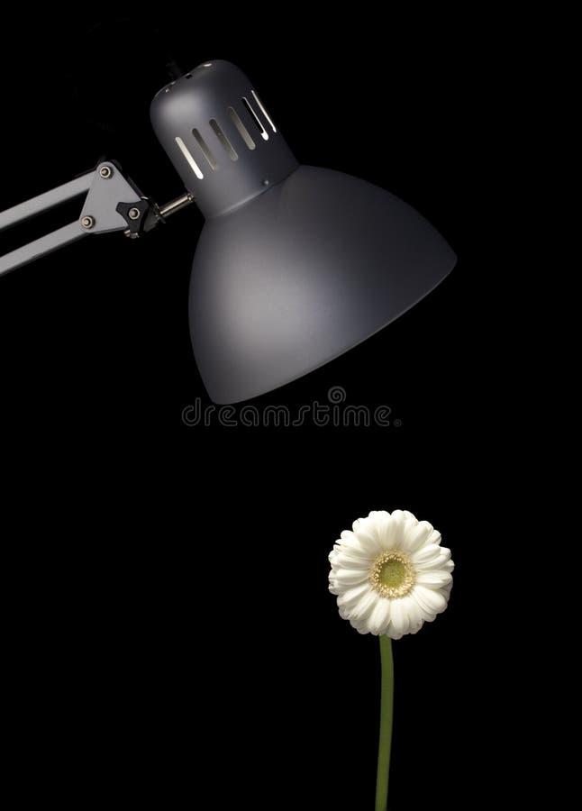 Crescimento de flor sob a lâmpada imagens de stock royalty free