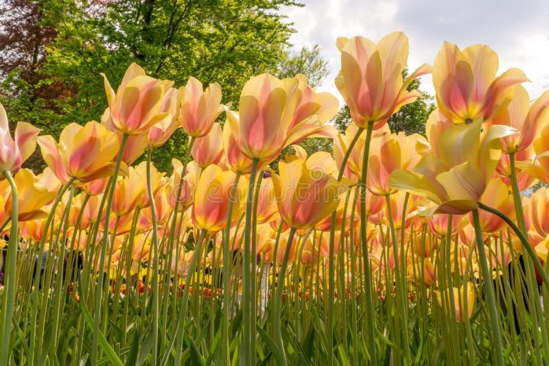 Crescimento de flores alto imagens de stock