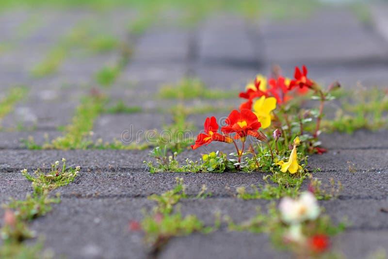 Crescimento de flores através do concreto fotos de stock