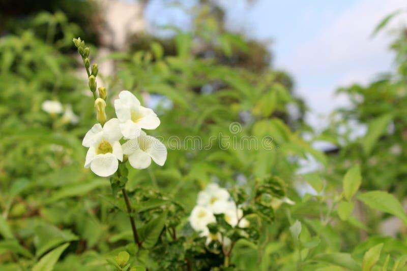 Crescimento de flores bonito no jardim no dia ensolarado foto de stock royalty free