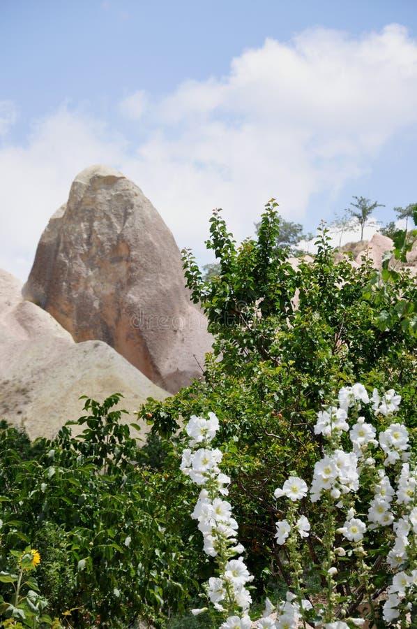 Crescimento de flores brancas na frente das rochas vulcânicas - Rose Valley vermelha, Goreme, Cappadocia, Turquia fotos de stock