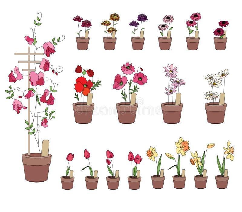 Crescimento de flores em peitoris da janela Gerbera, tulipa ilustração stock