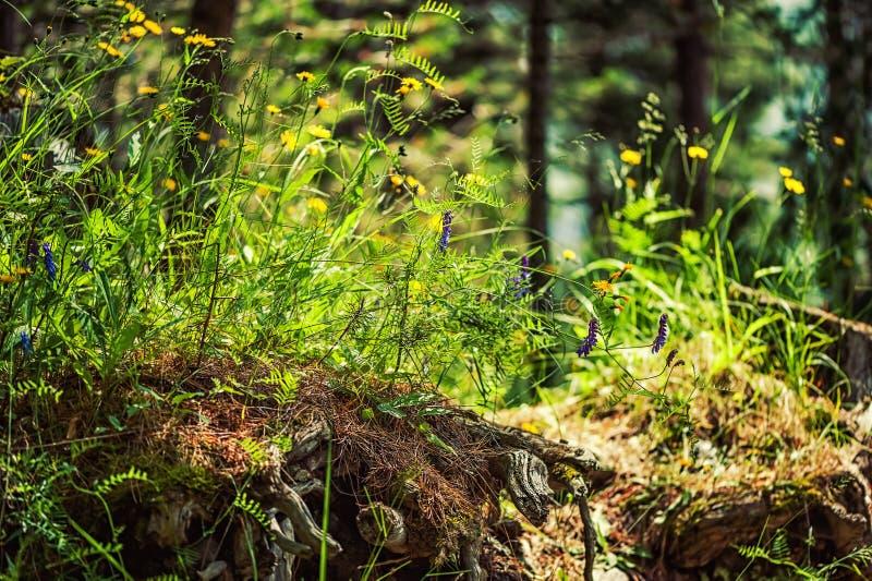 Crescimento de flores selvagens bonito em uma árvore velha da senão fotografia de stock