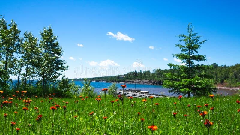 Crescimento de flores selvagens bonito perto da costa norte do grande Lago Superior imagens de stock royalty free