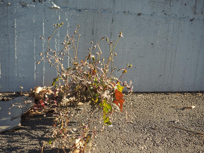 crescimento de flores selvagens do concreto fotografia de stock