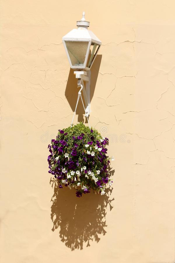 Crescimento de flores violeta branco e escuro do petúnia de um potenciômetro de flor suspendido da lâmpada de rua foto de stock royalty free