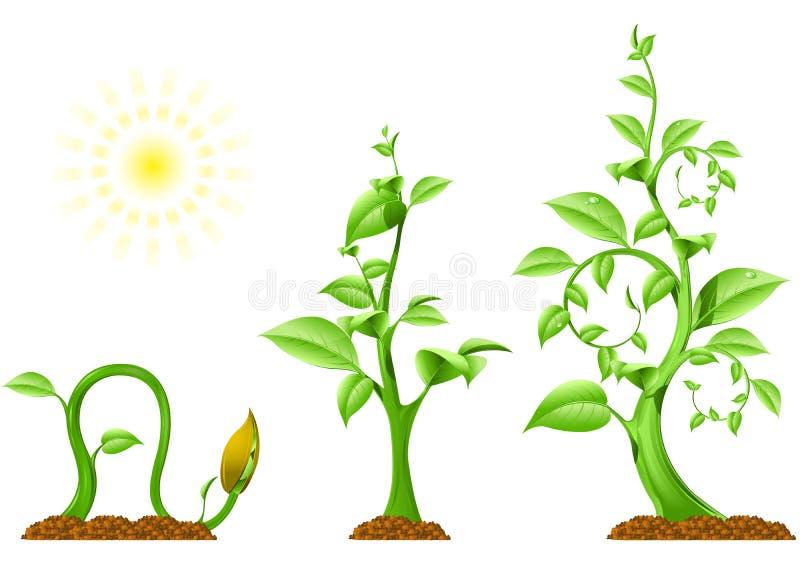Crescimento de planta ilustração royalty free