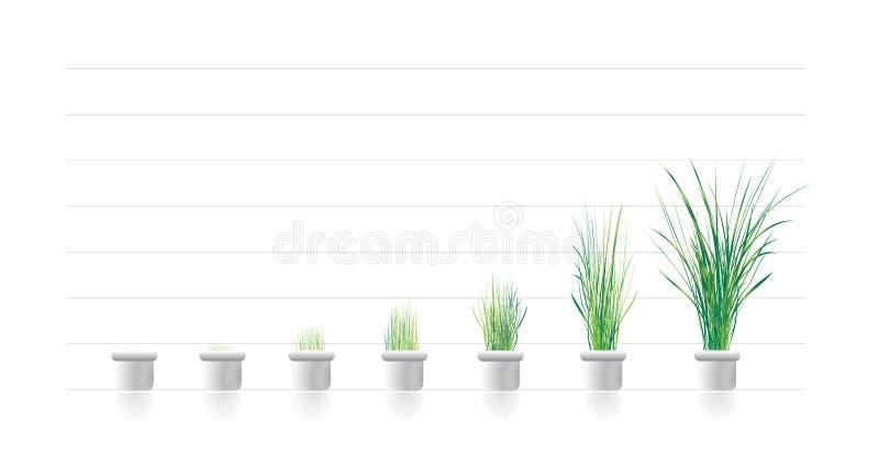 Crescimento de planta nos estágios ilustração royalty free