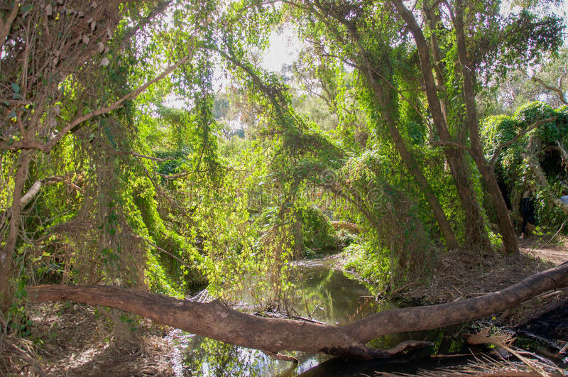 Crescimento nos pantanais imagens de stock royalty free