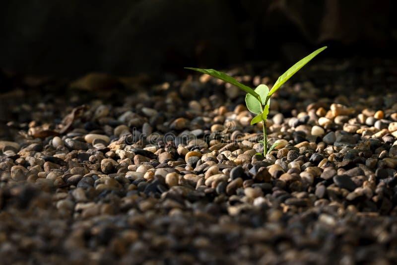 Crescimento pequeno da árvore na rocha foto de stock
