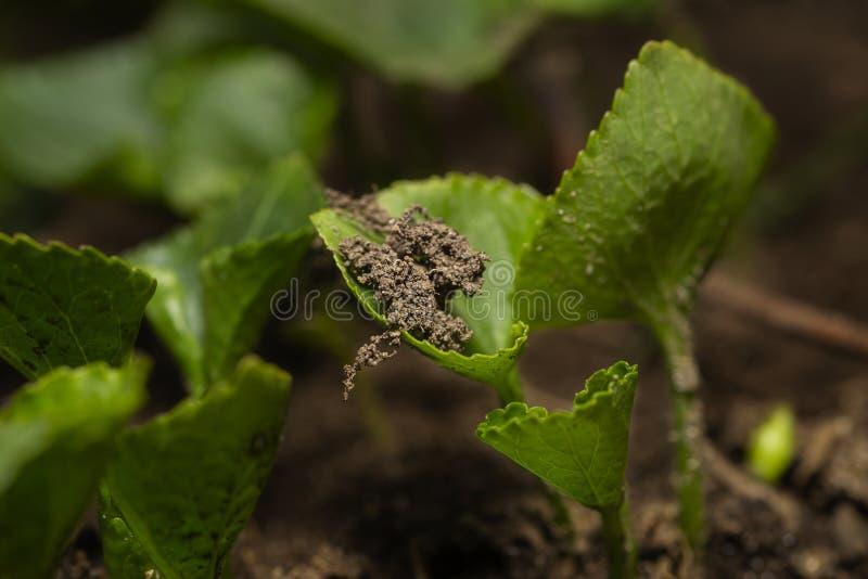 Crescimento pequeno da planta fotografia de stock royalty free