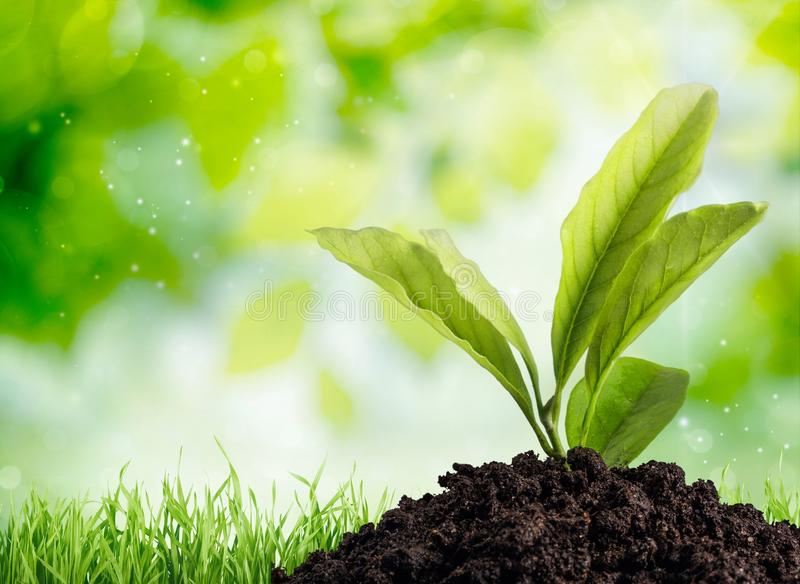 Crescimento vegetal imagens de stock royalty free